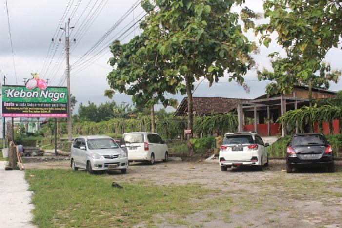 Kebon Naga: Agrowisata Petik Buah Naga Organik