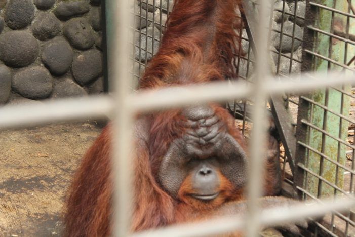 Wildlife Rescue Center: Mengembalikan Jati Diri Satwa Liar
