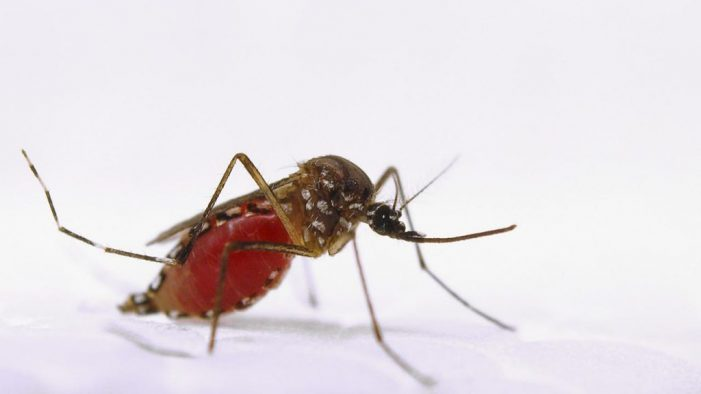 Tantangan Memberantas Demam Berdarah Dengue (DBD) di Kecamatan Mlati