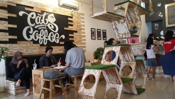 Cats and Coffee Café: Kafe untuk Para Pecinta Kucing di Yogyakarta