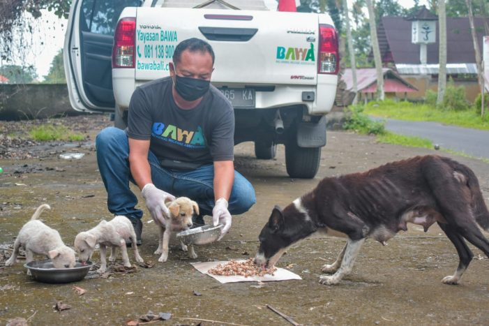 Bali Animal Welfare Association, Bekerja di Tengah Keterbatasan Akibat Pandemi